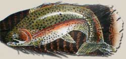 Colorado Rainbow Trout Painting